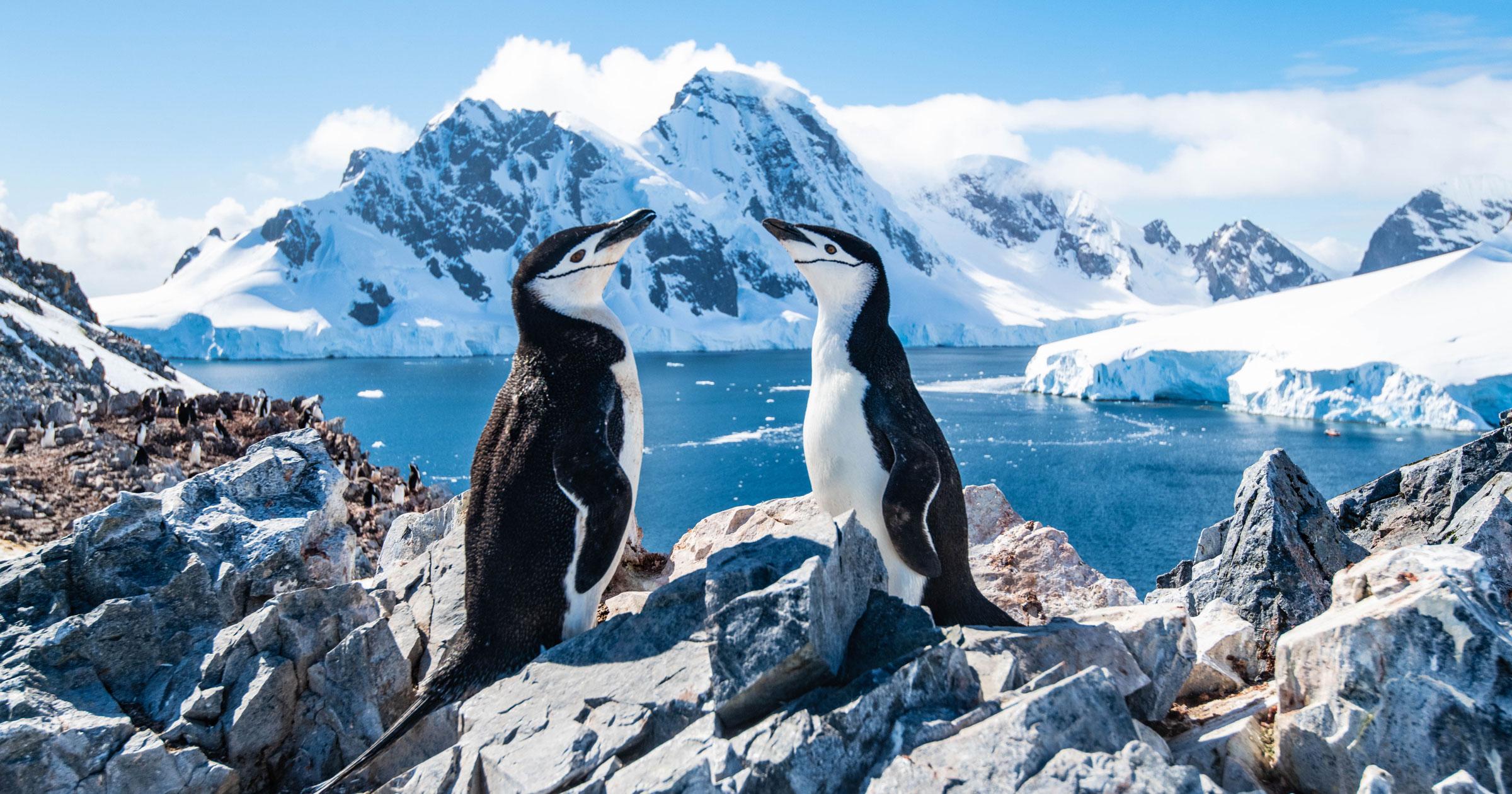 Antarctica Snow & Penguins